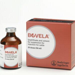 Bovela