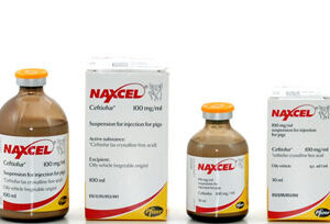 Naxcel 100 mg/ml Suspension for Injection
